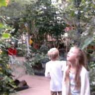 butterfly wings conservatory a kid friendly thing to do reviewed by mom and kids,things to do with kids CT,things to do with kids MA,things to do with children CT or MA